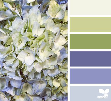 Hydrangea Hues - http://design-seeds.com/index.php/home/entry/hydrangea-hues1