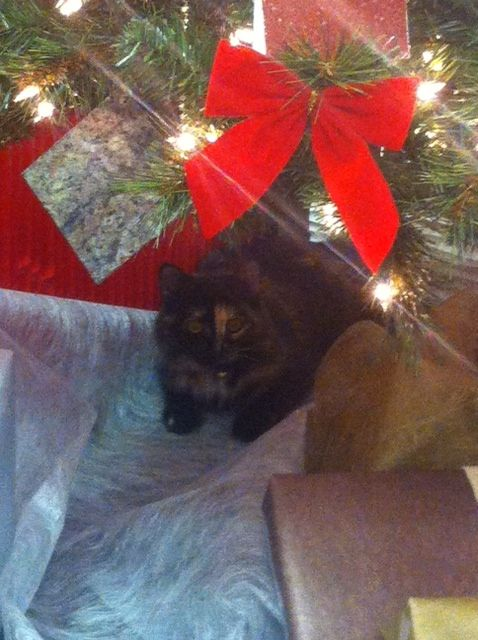 Our assistant Cali under the tree