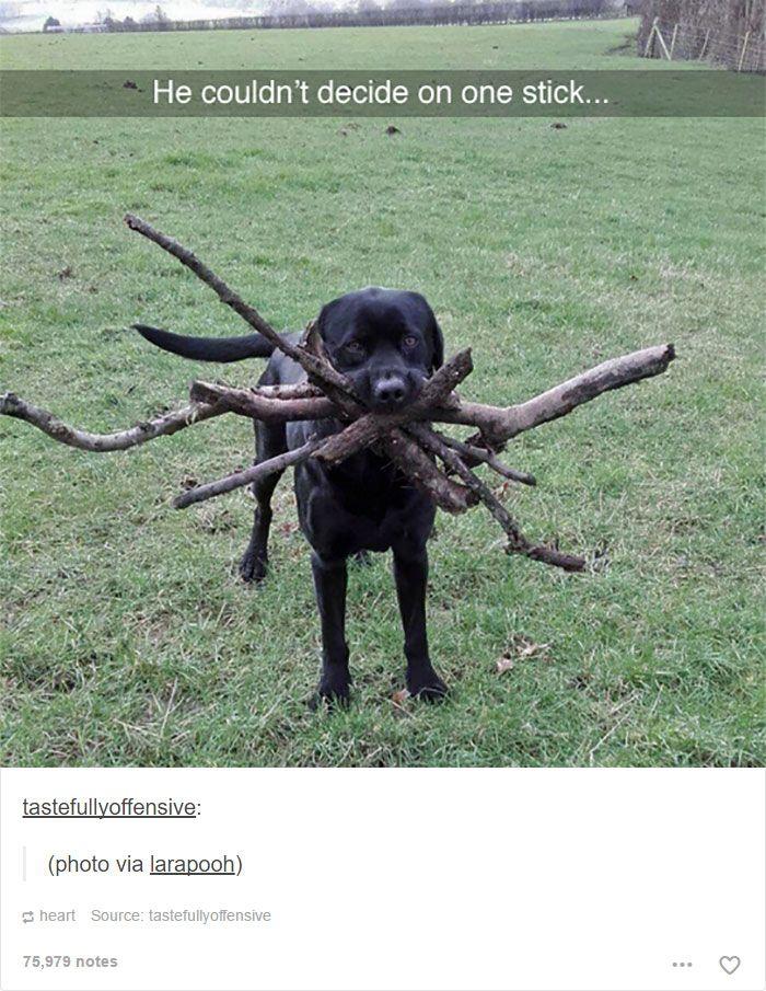 30 photographs commentées de chiens absolument hilarantes (web page 4)