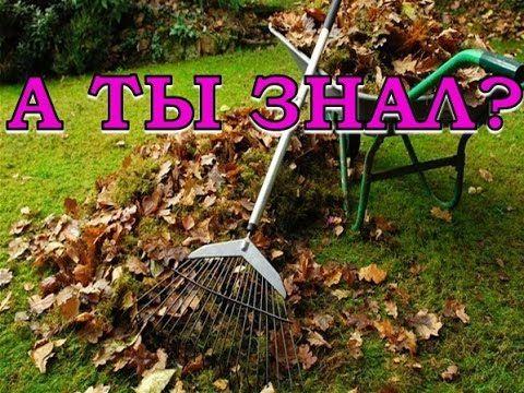 Нужно ли убирать листья под деревьями?