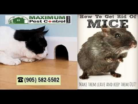 If you tired of trying Do-it-Your-Self mice control and failed so miserably afte