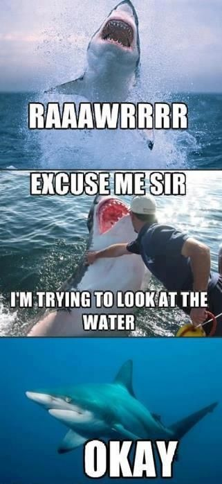 funny shark pics - Google Search