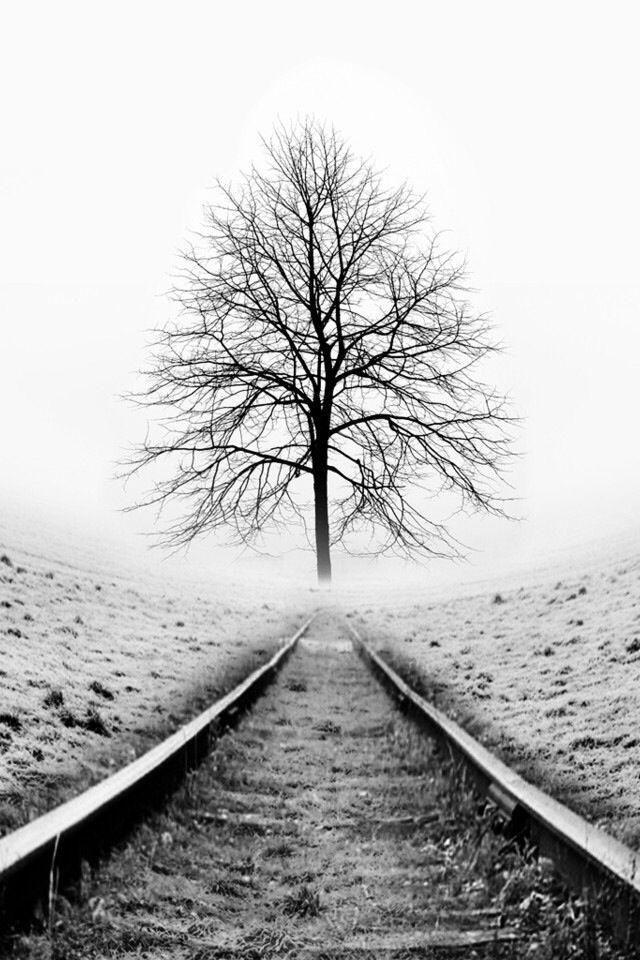 Dieses Bild hat viel negativen Raum, was den Baum und die Eisenbahnschienen wichtiger erscheinen lässt.