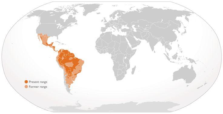 Image result for jaguar animal map range