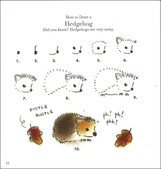 Gallery For gt How To Draw A Baby Hedgehog