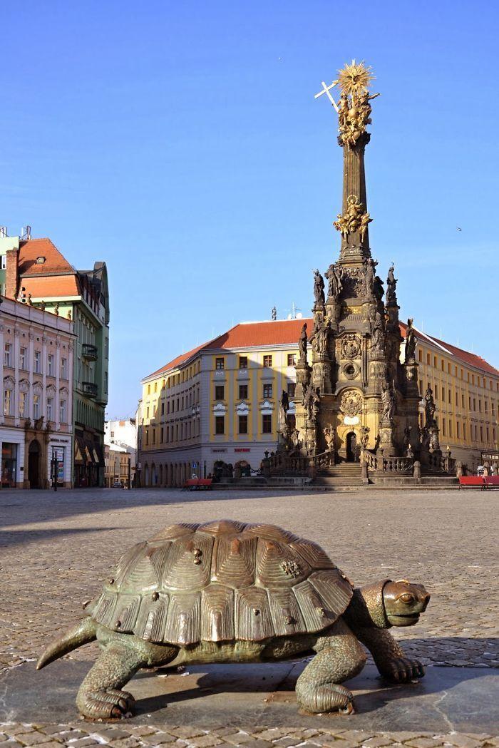 Turtle In Olomouc, Czech Republic