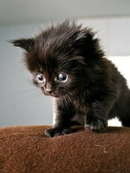 OMG! This little kitten is just too cute!