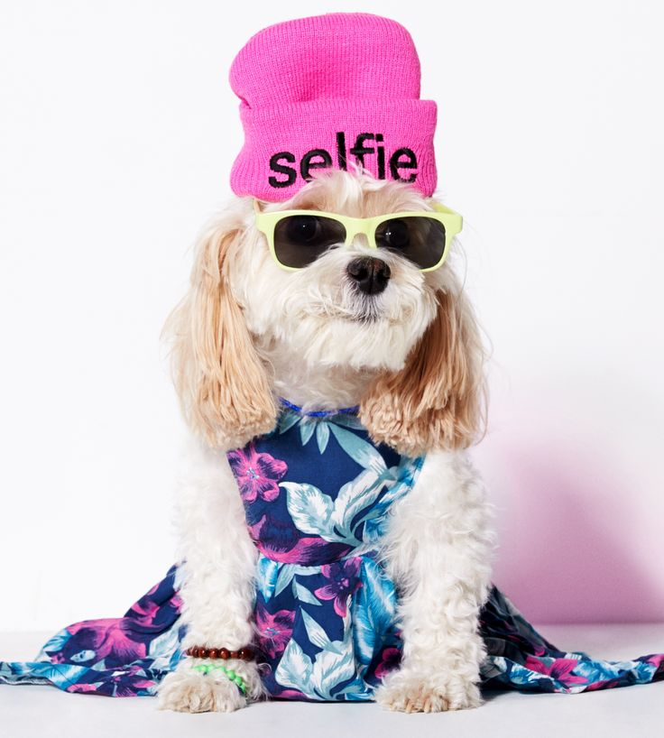 Is American Beagle Outfitters is a real thing!