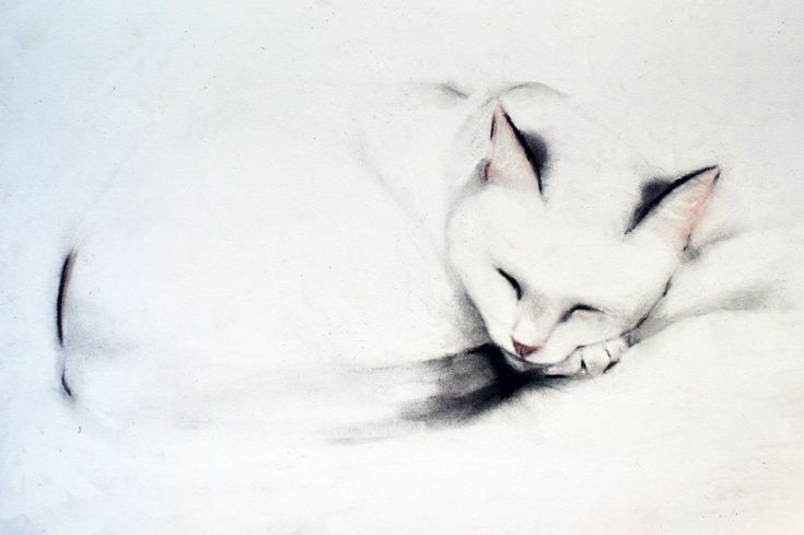 ARTFINDER: Sleeping Cat 2 by Kellas Campbell - Charlie, my cat, sleeping on a blanket.  Charcoal, pencil and pastel (for nose and ears) on 250gsm A3 paper.