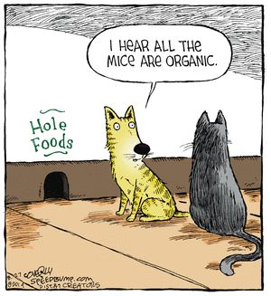 A couple of cats that are looking to be more health conscience about their food. #petjokes #catcartoons #catcomics