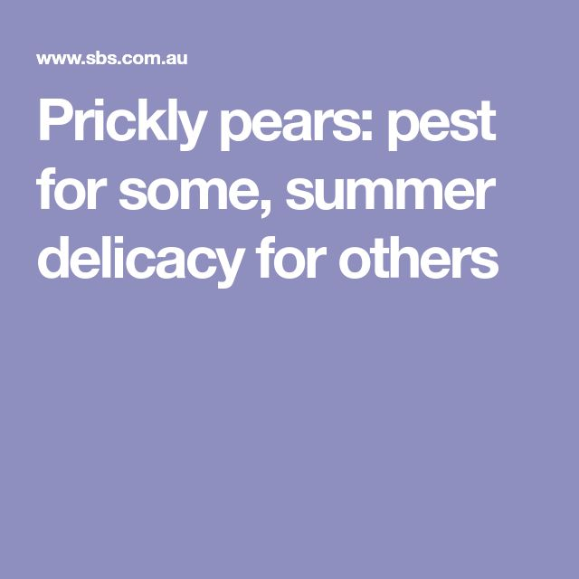 Prickly pears: pest for some, summer delicacy for others