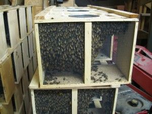 2 Common Ways To Get Bees. The 1s method, & the most common, is what is called a package of bees. A package comes in 3 sizes. 2, 3, & 4 lb.sizes. They come in a little box that has screened sides & a small can inside with sugar syrup to keep them alive, with a small cage suspended in the box that contains the queen.  The 2nd is called a Nuc, or a nucleus hive. This is a miniature hive, usually 5 frames of bees, brood, honey, & pollen. A bit more expensive, but carries some huge benefits.