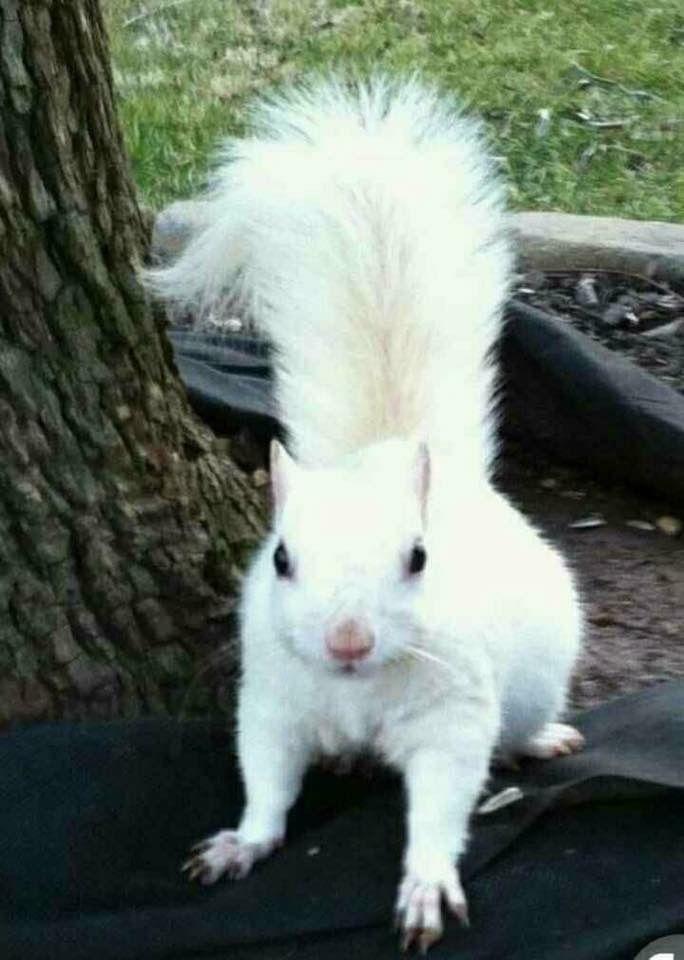 White squirrel...