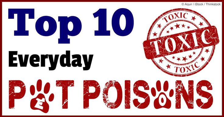 187 Best Images About Pet Poison On Pinterest Dog Care