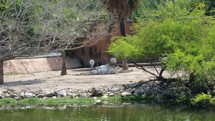 Gladys Porter Zoo, Brownsville, Texas