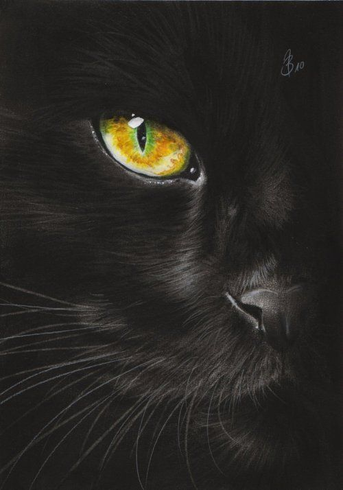Halloween all hallows eve trick or treat black cat bat - Scary yellow eyes ...
