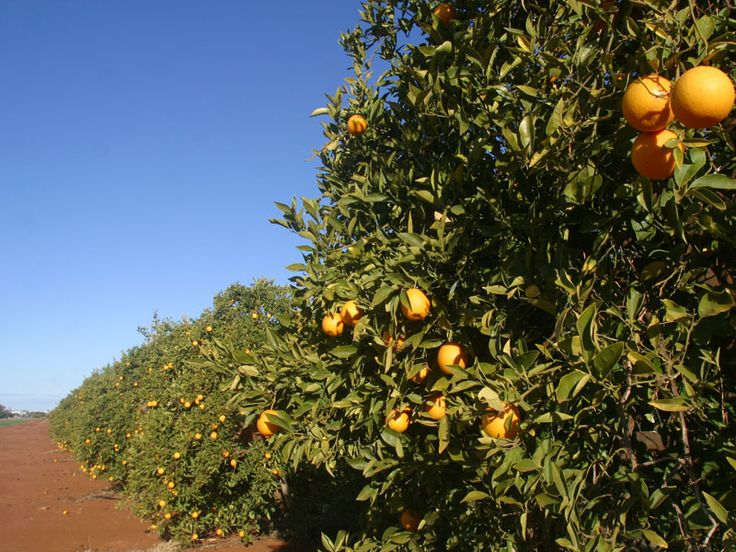 Red dirt, oranges, clear blue sky - the colours of home. #Griffith #Riverina #Australia