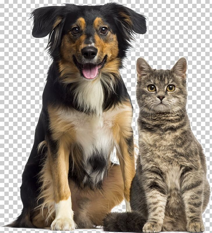 Dog Cat Relationship Dog Cat Relationship Pet Sitting Veterinarian Png Clipart Animals Cat Like Mammal Companion Dog Dog Dog Breed Free Dog Cat Pets Dogs