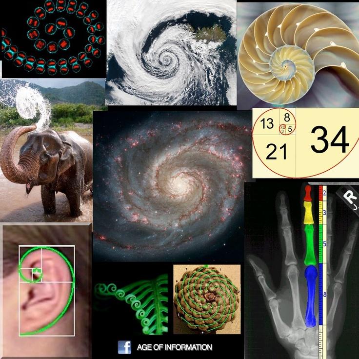 17 Best images about 4de ljr rijen (oa Fibonacci) on ...