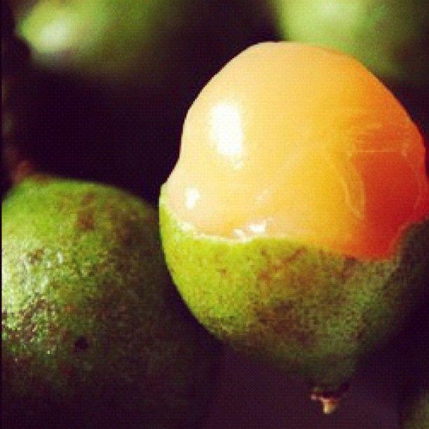 fruit battery quenepa fruit