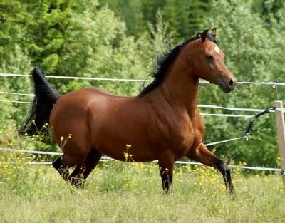 Hest er best!