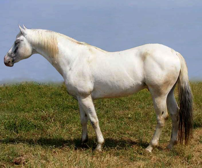 89 best images about horse spot me an appaloosa on for Thoroughbred tattoo lookup