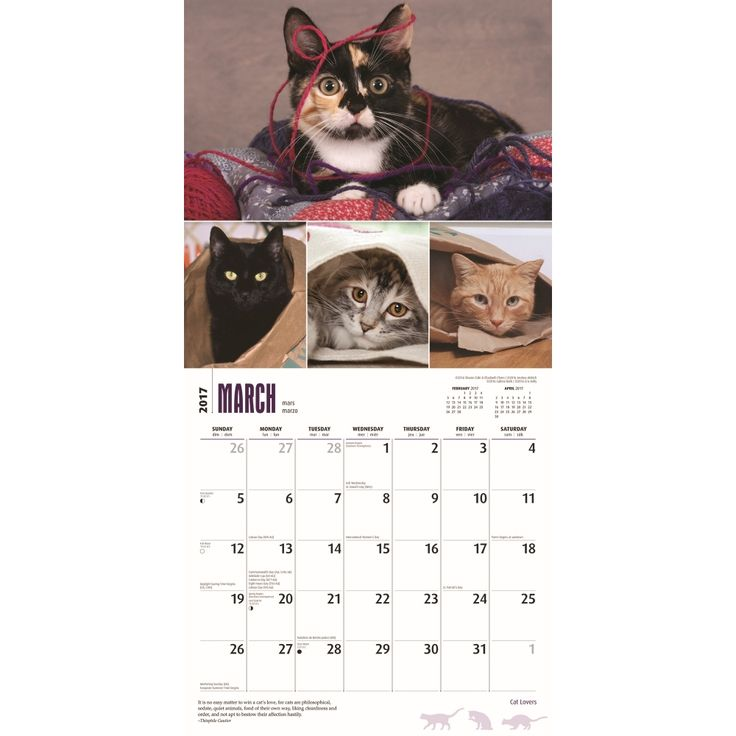 Cat lovers wall calendar by browntrout