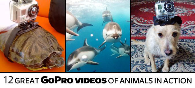 These videos will put you in the driver's seat with some of the animal kingdom's wildest denizens. #video #animals