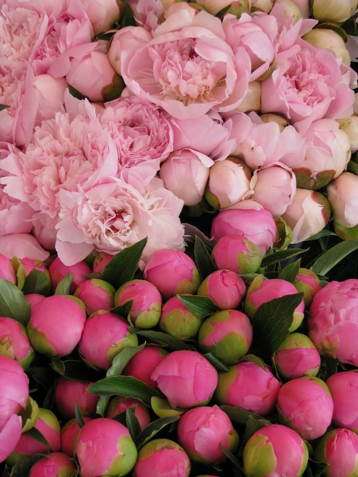 Michael Hampton- Peonies at the Farmers Market in I'sle su la Sorgue Luberon Valley