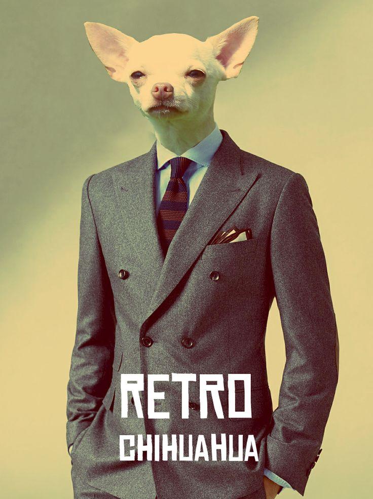 Retro-chihuahua - Photoshop