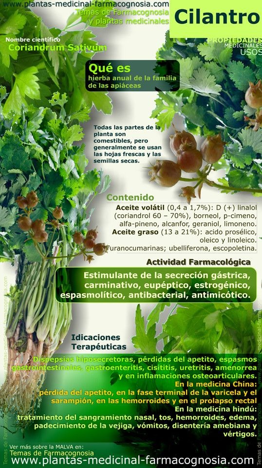 Infografía. Resumen de las características generales de la planta de Cilantro. Propiedades, beneficios y usos medicinales más comunes del Cilantro (Coriandrum Sativum). Hojas y semillas.