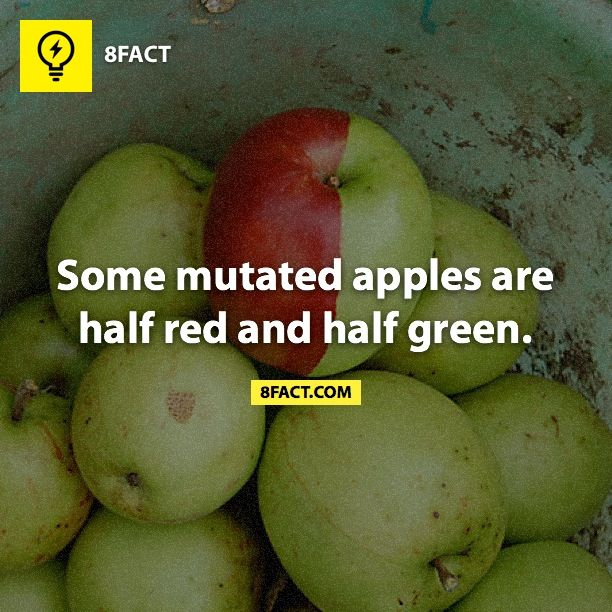 8fact | Apple Color