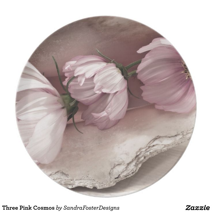 Three Pink Cosmos Dinner Plate