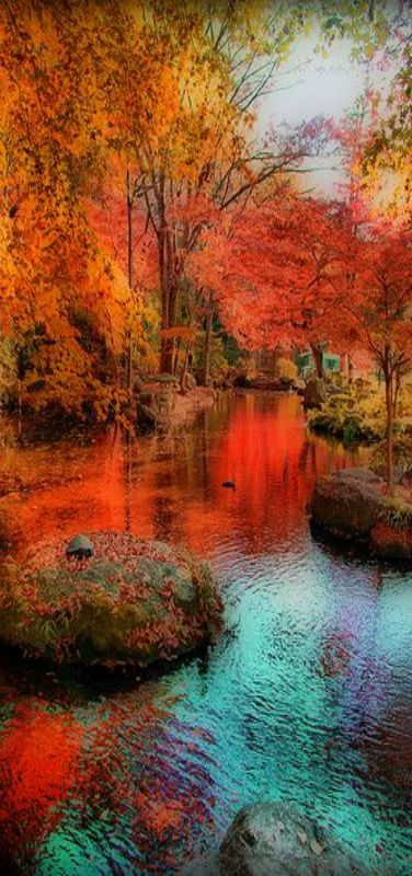 Autumn water reflexion, Nagoya, Japan by W P