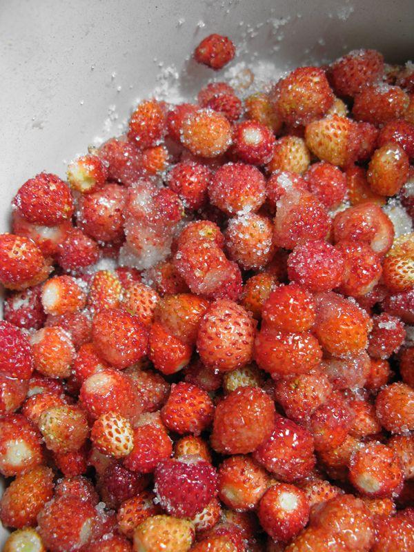 Άγριες φράουλες σε ζάχαρη