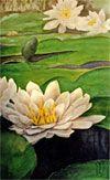 Nancy Nichols: Watercolor of waterlilies