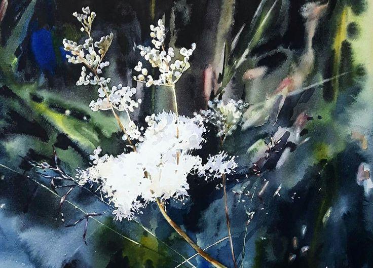 Watercolor: Meadowsweet. Isn't that the most fairytale-ish name a plant can have? // Akvarell: Älggräs. (Inte lika sagolikt namn på svenska som på engelska). /Elisabeth Biström