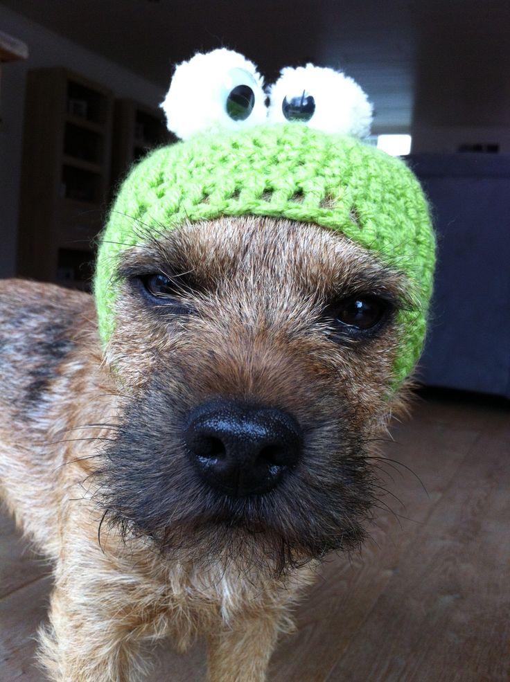 Frog Eddie