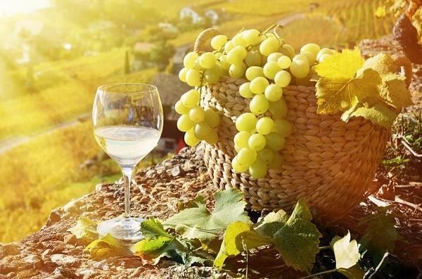 Italië wijnland