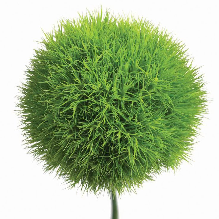 I have to find this!  Looks like it came straight out of a Dr. Seuss book.  Dianthus barbatus 'Green Trick'