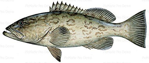 12 Sheet  Grouper Ocean Fish Birthday Edible CakeCupcake Party Topper ** Click image to review more details.