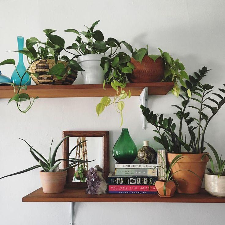 pinterest; @kittymachine ~ETS #plants