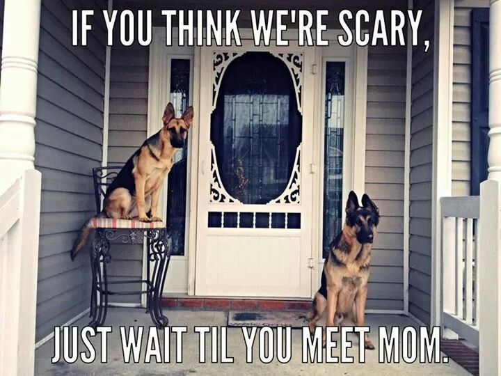 My 2 huge German Shepherds do this all the time..... Waiting for my mother and not my father