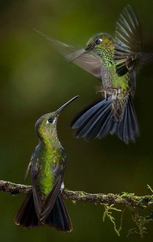 Vackra fåglar...