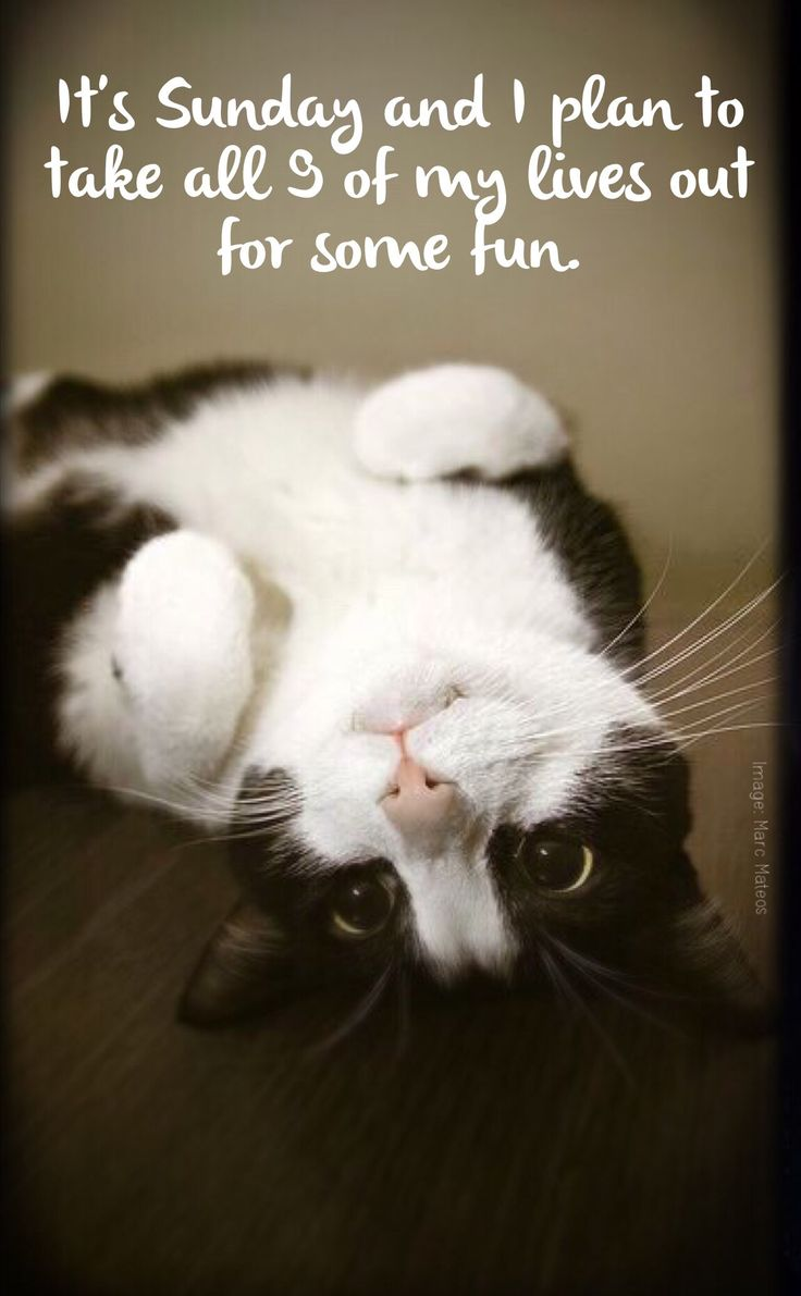 388 Best Hamburg Veterinary Clinic Images On Pinterest Fluffy Pets Funny Things And Adorable Animals