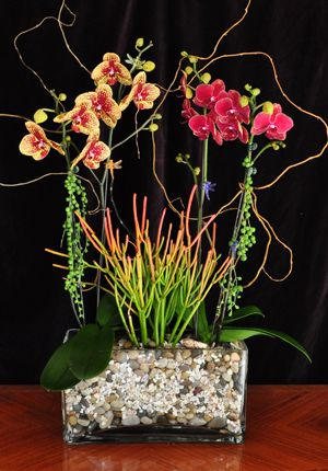 succulents and orchids  interesting combination of color  texture  Succulents  Orchids