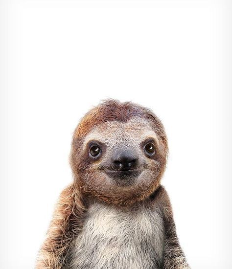 20 best wallpapers images on pinterest backgrounds - Sloth wallpaper phone ...