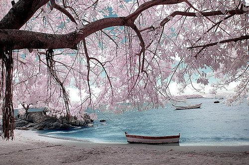 wonderland by Bruna Marchioro, via Flickr