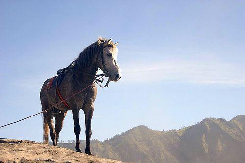 Horse at Bromo Tengger Semeru National Park East of Java - Indonesia #Horse #Animal #Indonesia