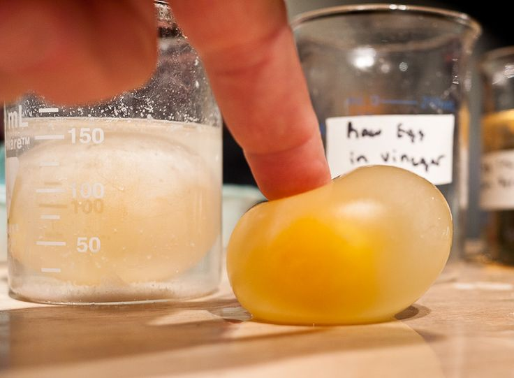 Make an egg shell invisible with explanations on why this happens for science lesson.